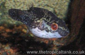 informatie zoetwater vis