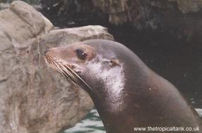 Sea Lion - 'Is this my best side?'
