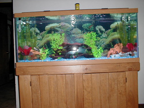 75 gallon aquarium uk aquarium fish tank pics mike 39 s 75 for 75 gallon fish tank dimensions